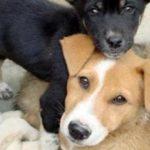 7º jornada de castración de mascotas