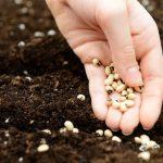 Buscá tus semillas y siembra con el calendario