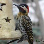 VGB se suma al Gran Día Mundial de Observación de Aves