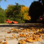Las hojas no son basura, nutren la tierra